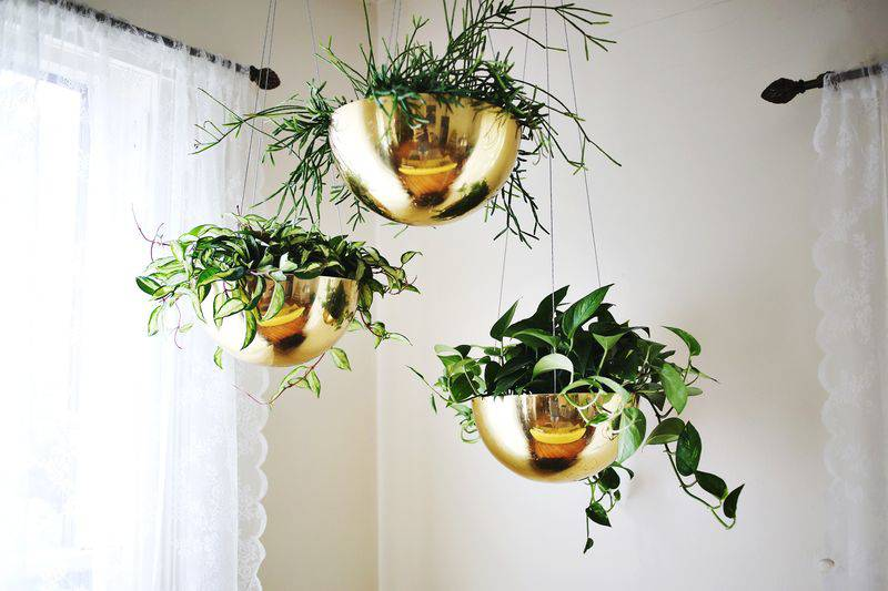 inspiration for hanging plants in my entryway on MostlySewing.com